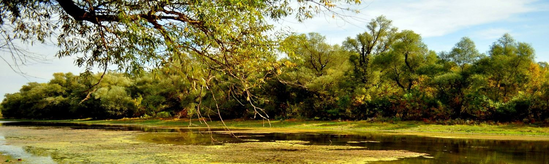 Specii și habitate